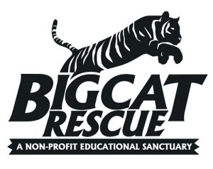 Big-Cat-Rescue Logo